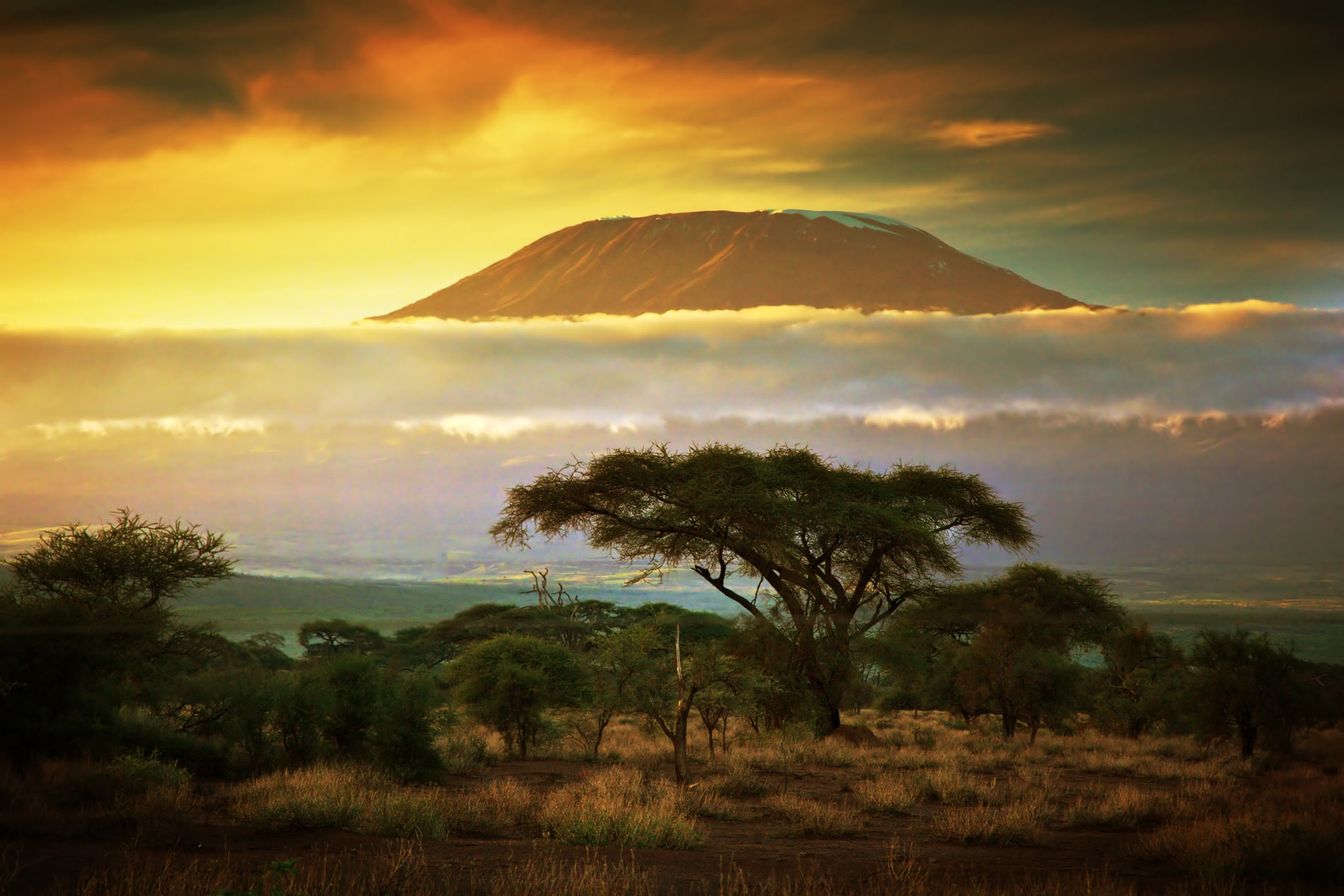 Mt. Kilimanjaro, bush & beach safari, Road Less Traveled Safari