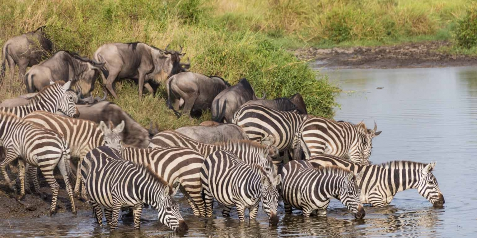 east african migration safari