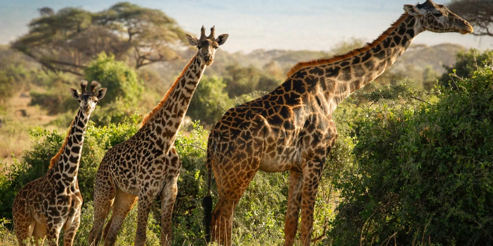 Explore Tanzania, bush & beach safari