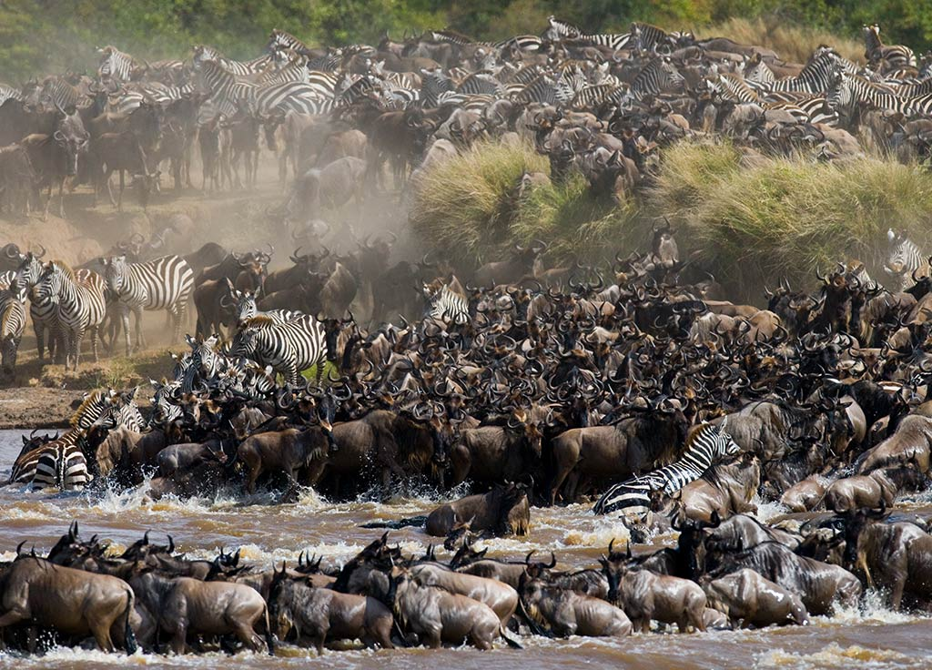 Great Migration Ombeni Safaris