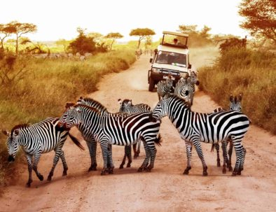 Zebras | Safari Package