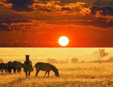 Serengeti Sunset | Safari Package