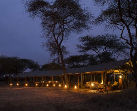 serengeti-safari-camp2